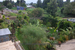 Blick auf den einen Gartenteil